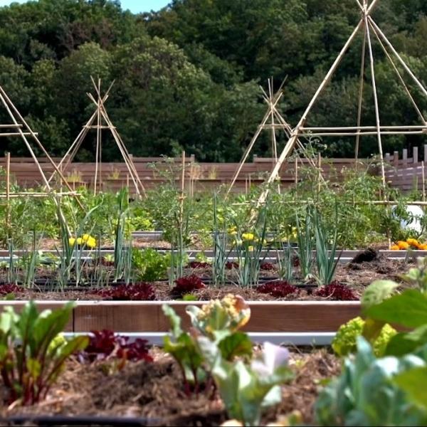 C3B a réalisé un jardin potager en toiture terrasse d'un bâtiment tertiaire